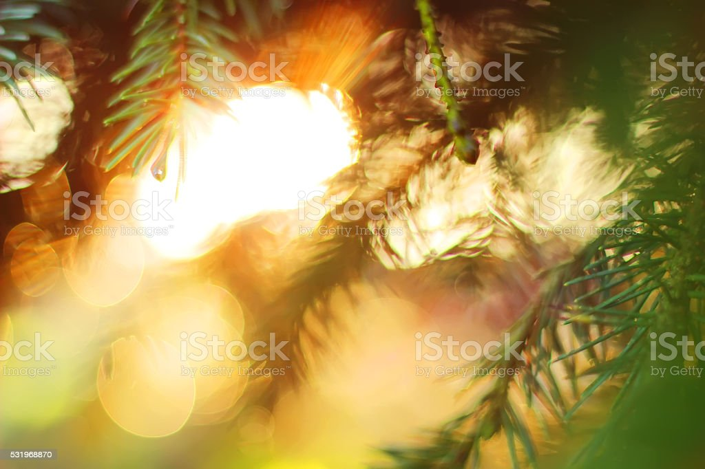 Sunlight In The Green Forest, Summer Time, bokeh royalty-free stock photo
