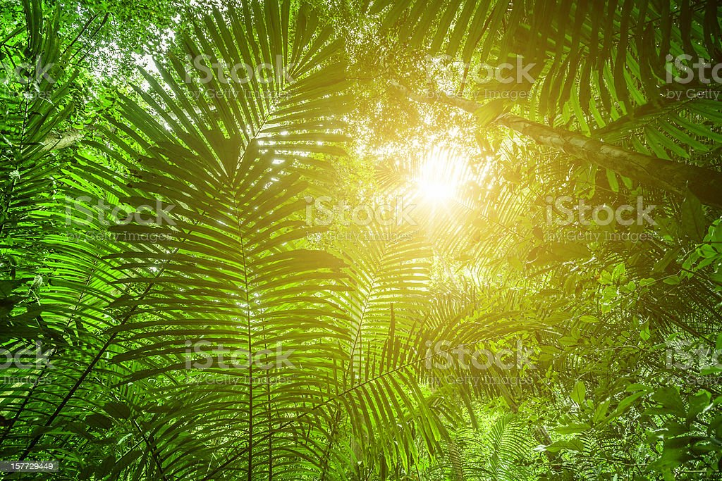 Sunlight in the Rainforest stock photo
