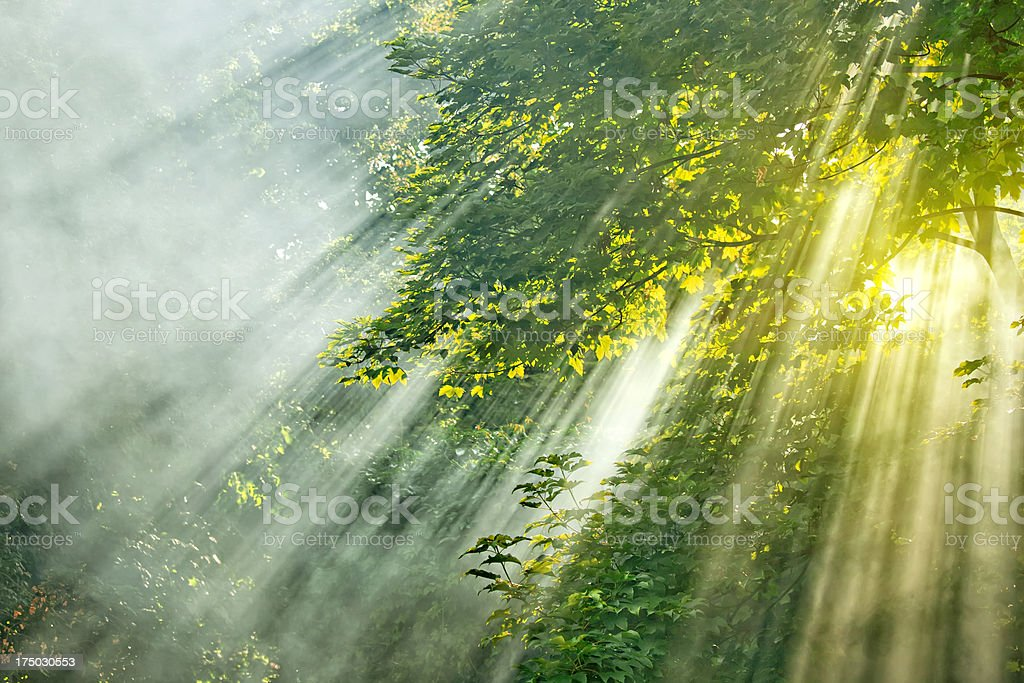 sunlight mist forest royalty-free stock photo