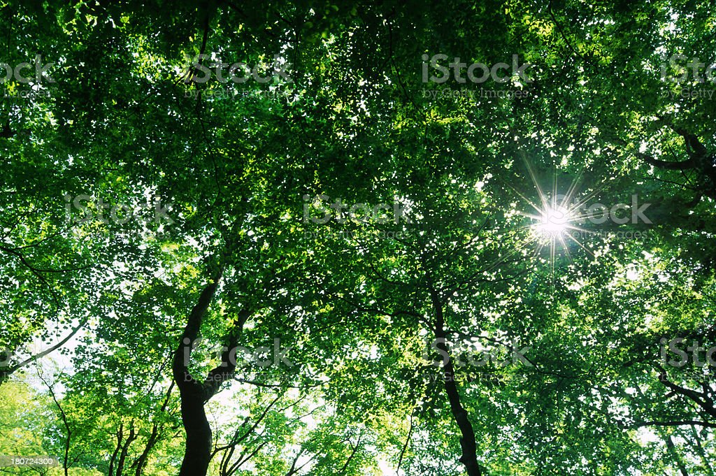 Sunlight of Forest royalty-free stock photo