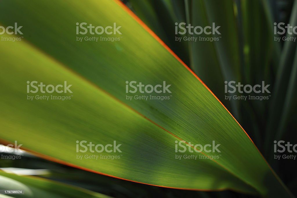 Sunlight on a flax leaf royalty-free stock photo
