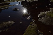 Sunlight on a pool of still water