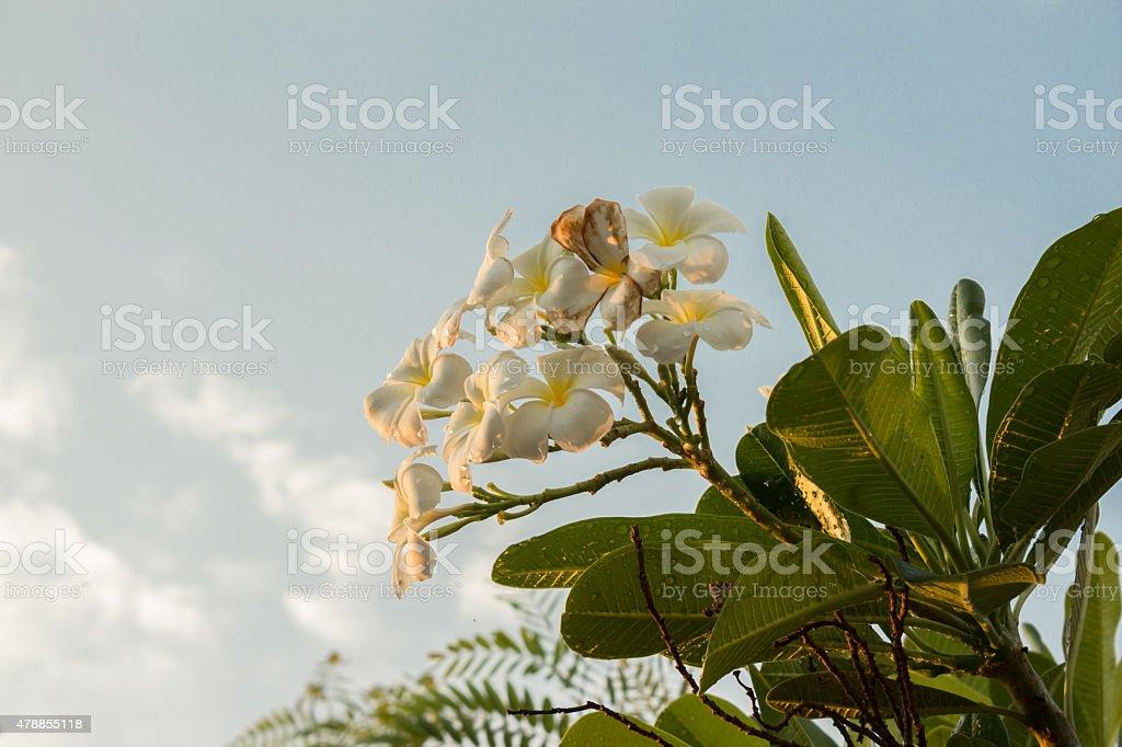 Luz do sol em flores com fundo de Nuvem foto royalty-free
