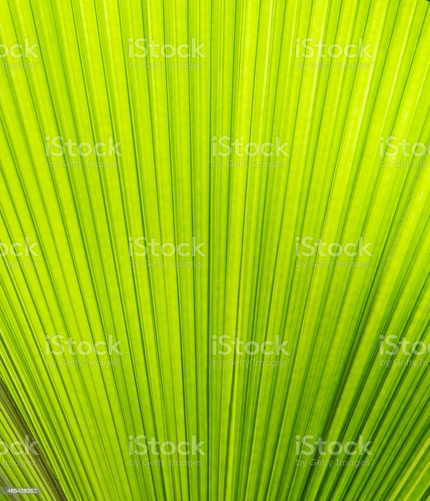 Sunlight on palm leaf royalty-free stock photo