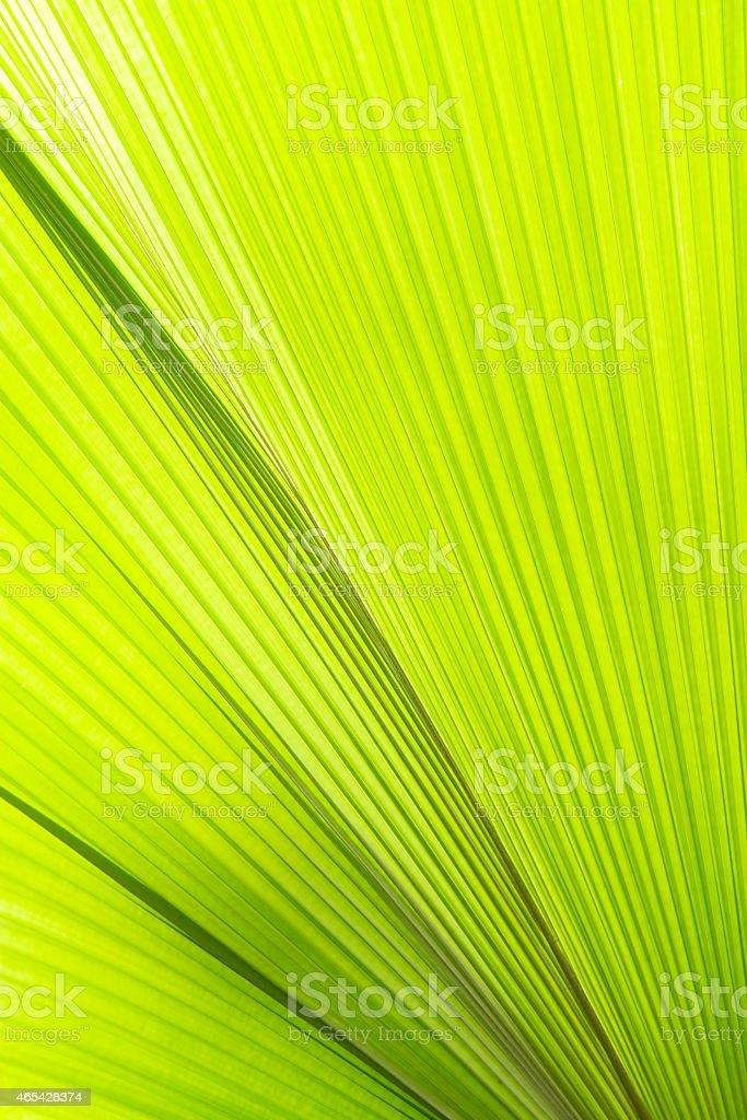 Sunlight on palm leaf royalty-free stock photo