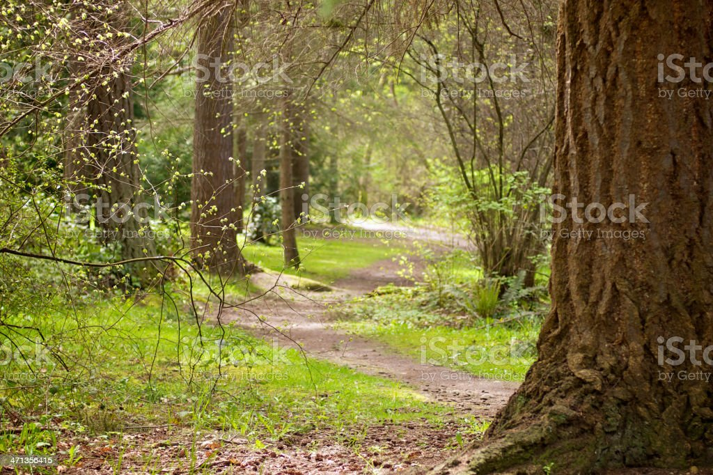 Sunlight on Path Through Large Trees in Early Spring stock photo