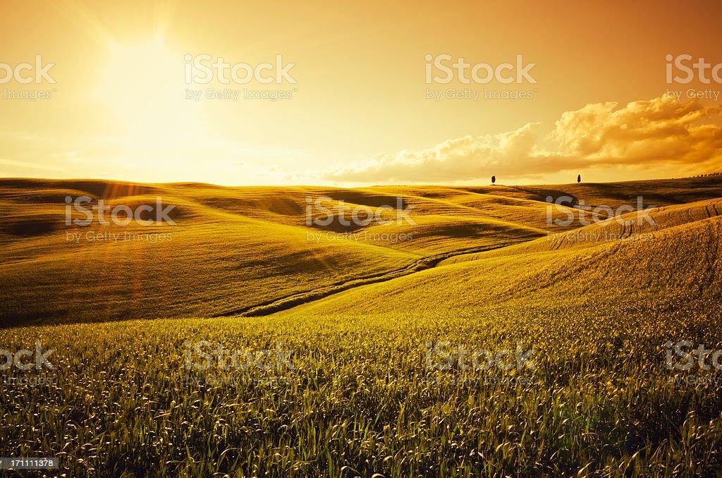 Sunlight on Tuscany crop landscape at dusk royalty-free stock photo