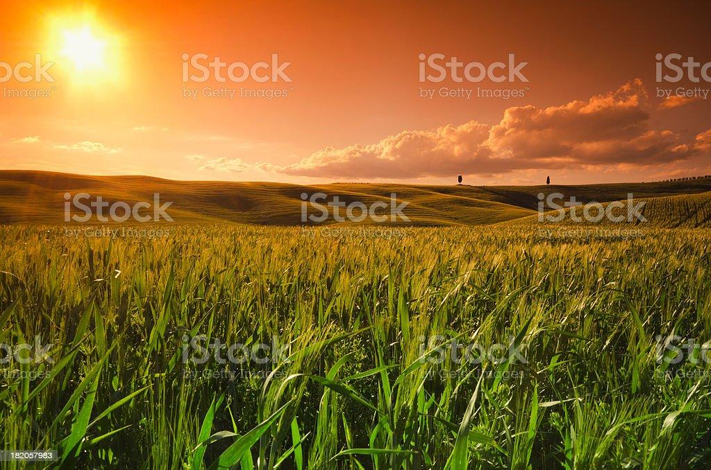 Sunlight on Tuscany wheat landscape at dusk royalty-free stock photo