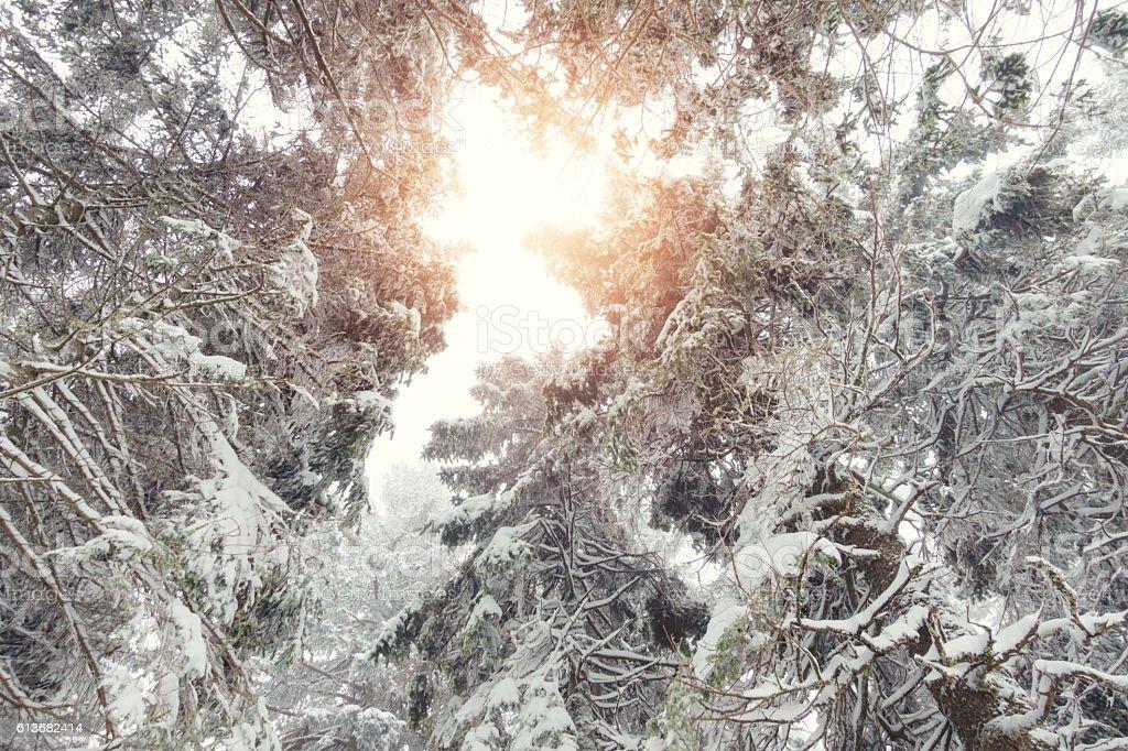 Sunlight Over Tree Crowns stock photo