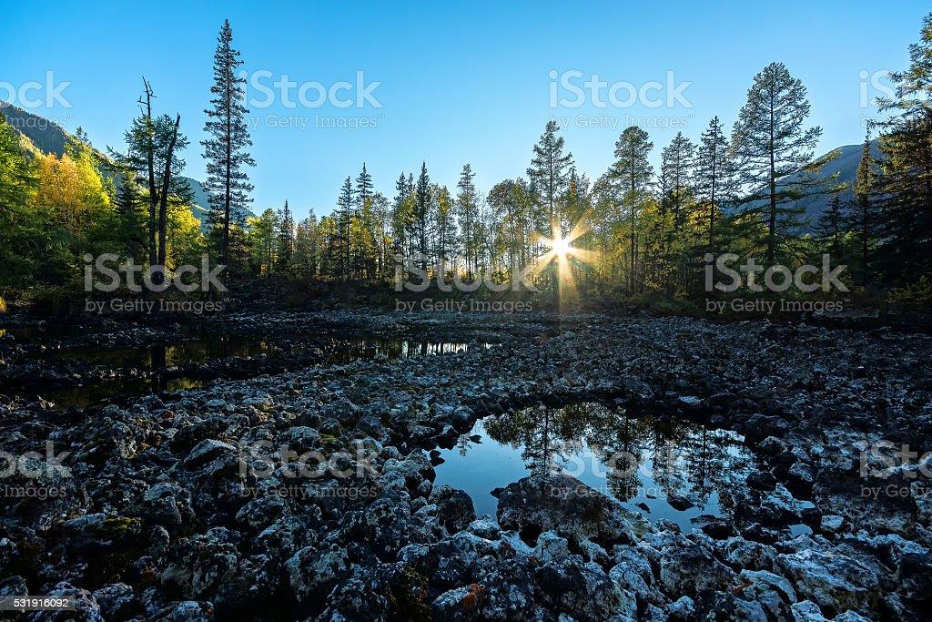 Sunlight passes through the trees stock photo