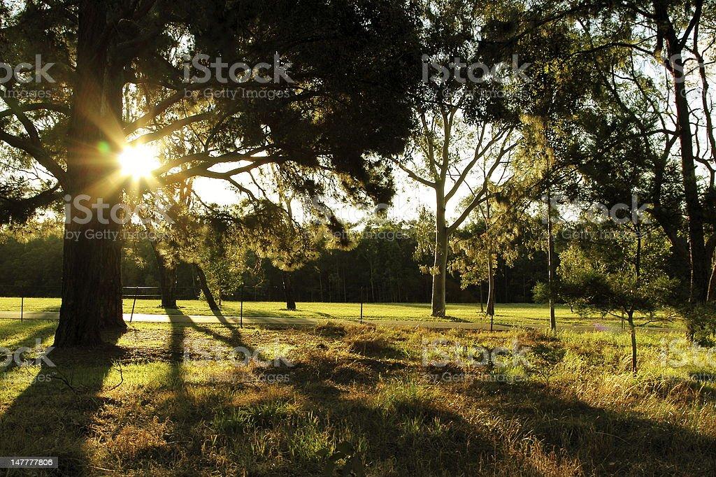 Sunlight passes through trees stock photo