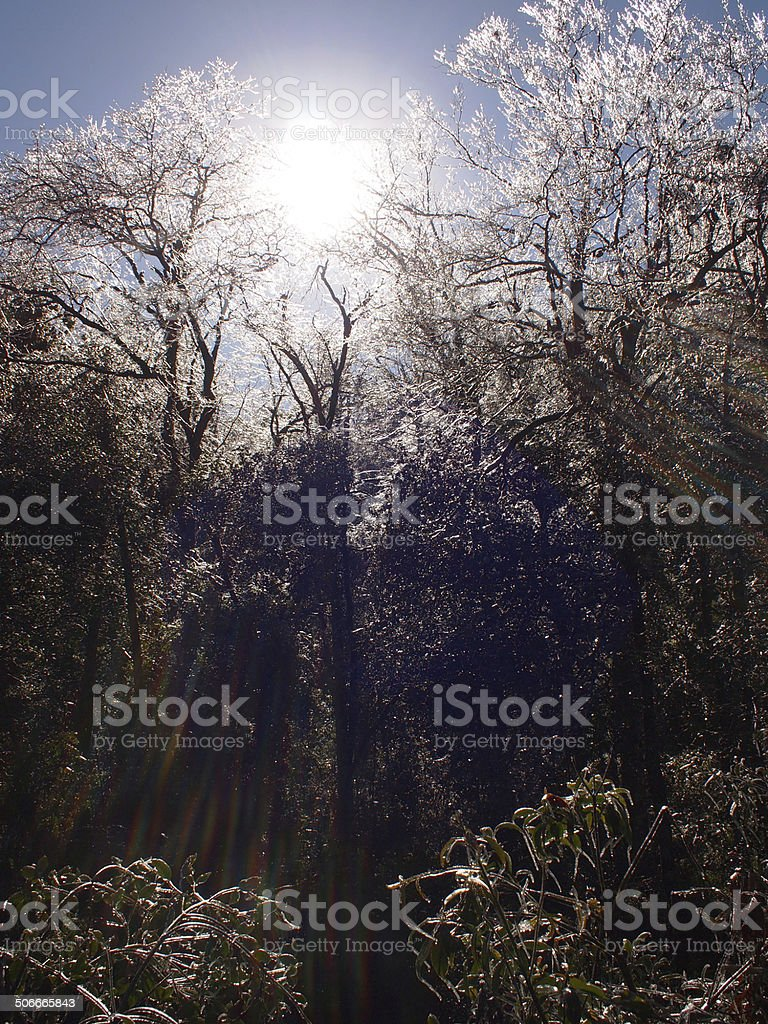 Sunlight penetrating into iced forest stock photo