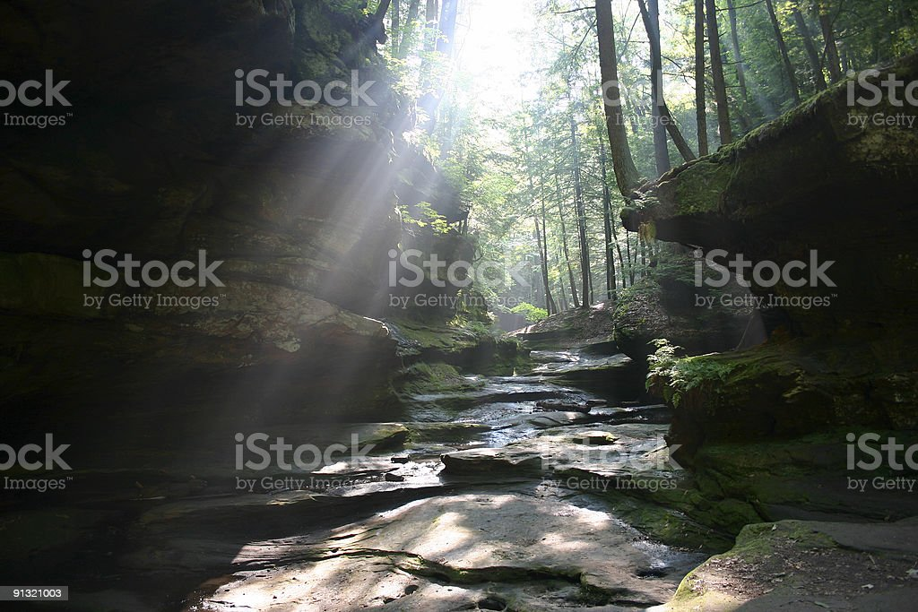 Sunlight shining through forest onto serene rocky creek royalty-free stock photo