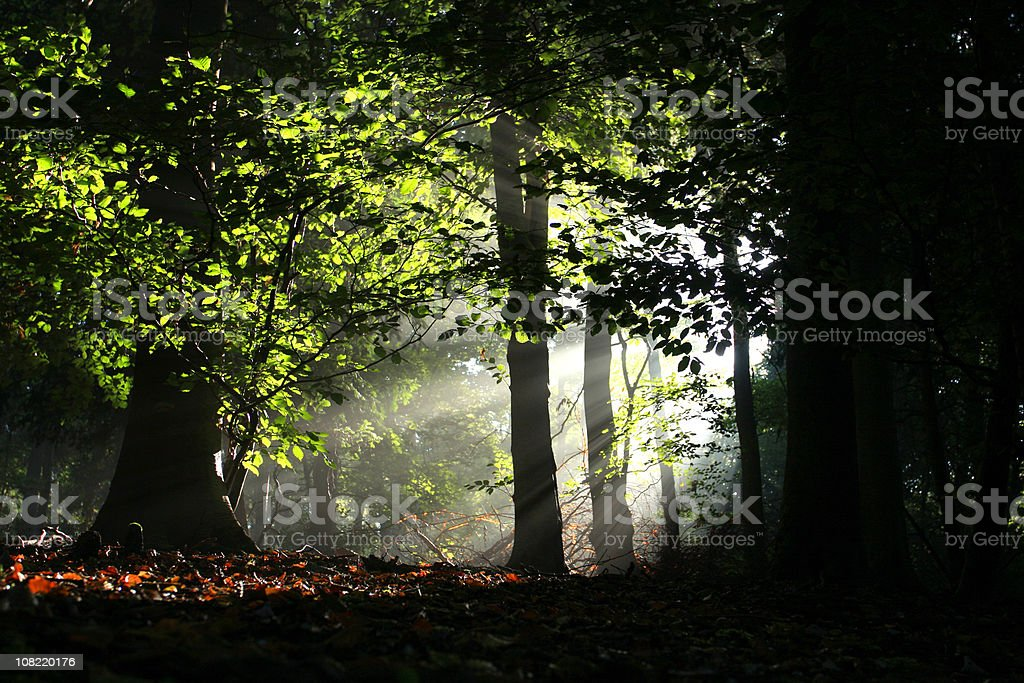 Sunlight Shining Through Leaves on Forest Floor royalty-free stock photo