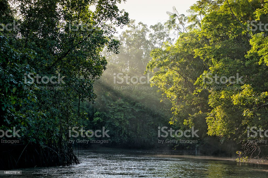 Sunlight shining through trees on river in Amazon rainforest stock photo