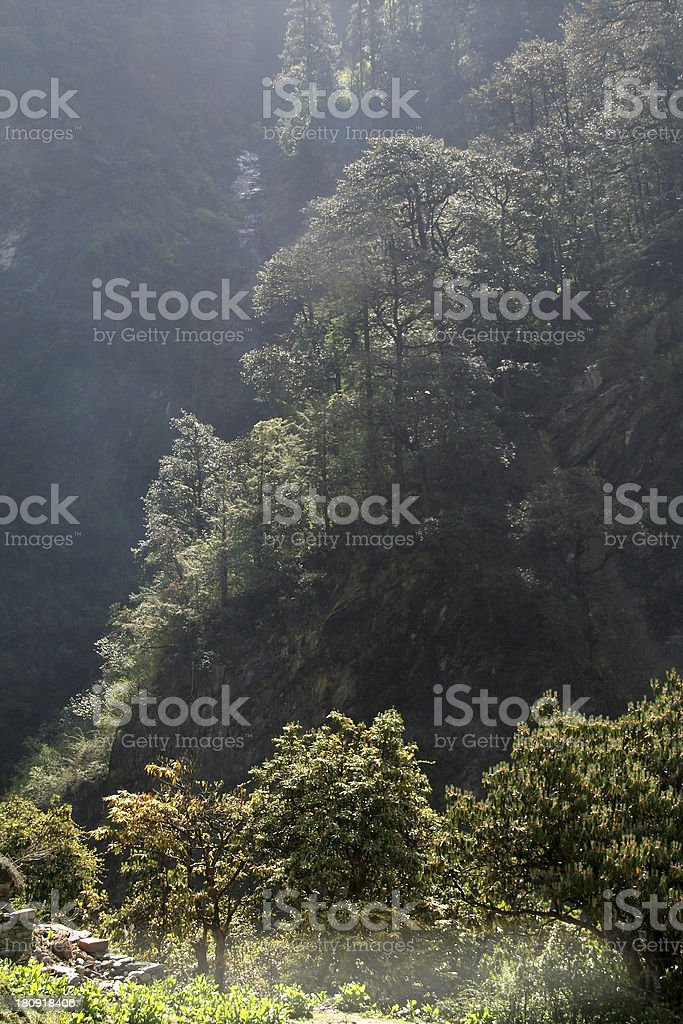 Sunlight Soaked Trees royalty-free stock photo
