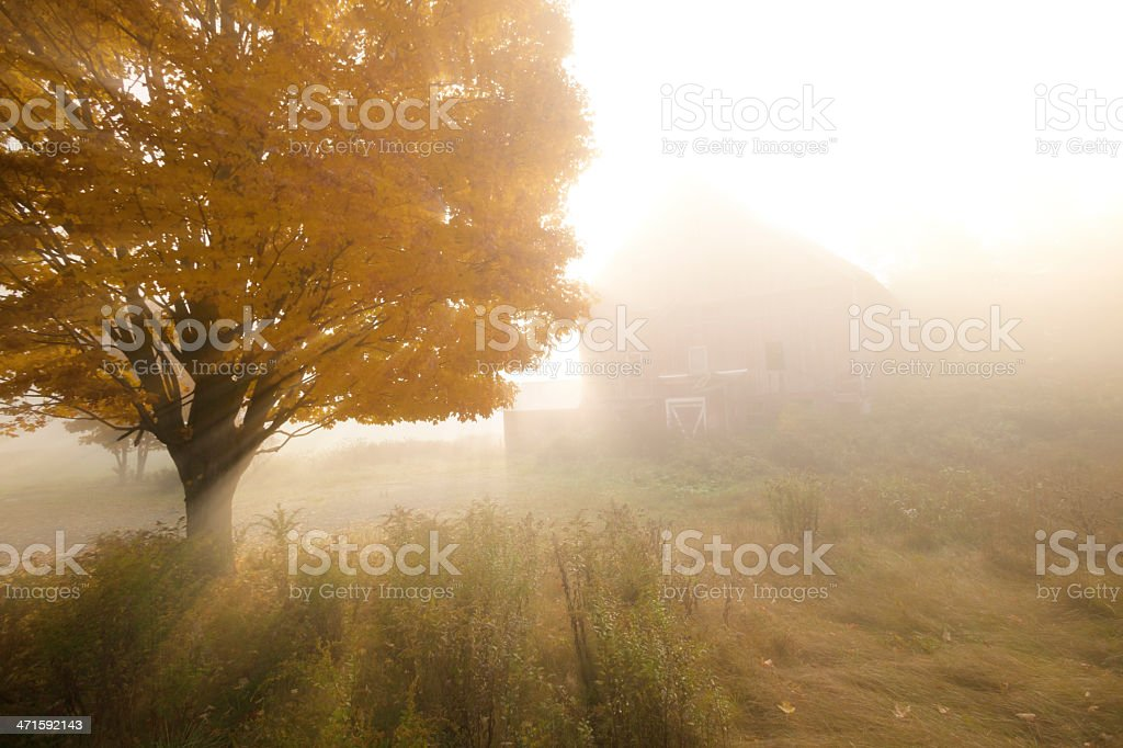 Sunlight streaking through foggy trees. royalty-free stock photo