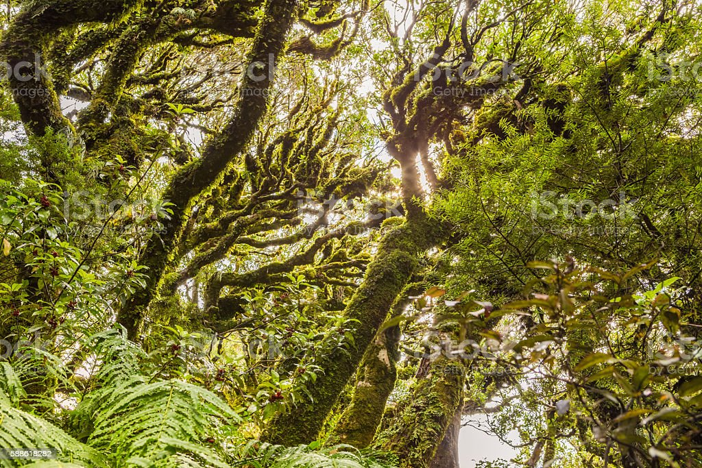 Sunlight through bizarre mossy tree branches stock photo