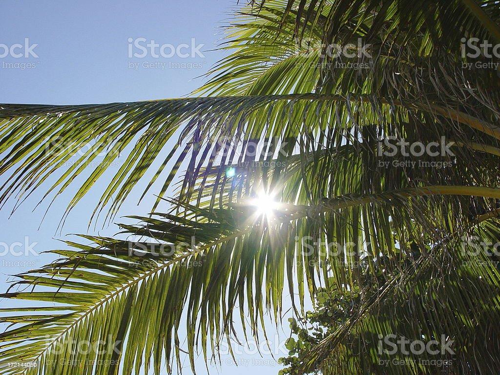 Sunlight through palm trees stock photo