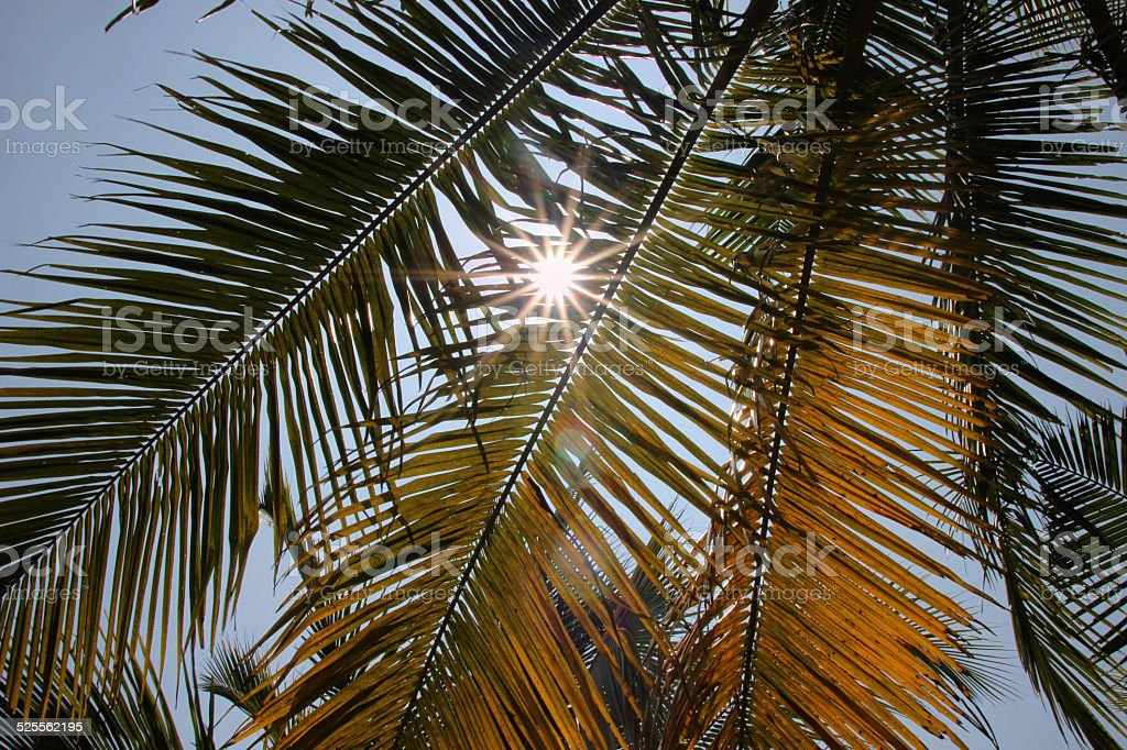 Sunlight through palms leaves on the blue sky royalty-free stock photo