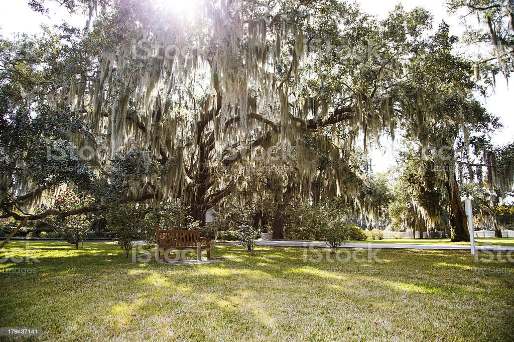 Sunlight Through Spanish Moss Over Park royalty-free stock photo