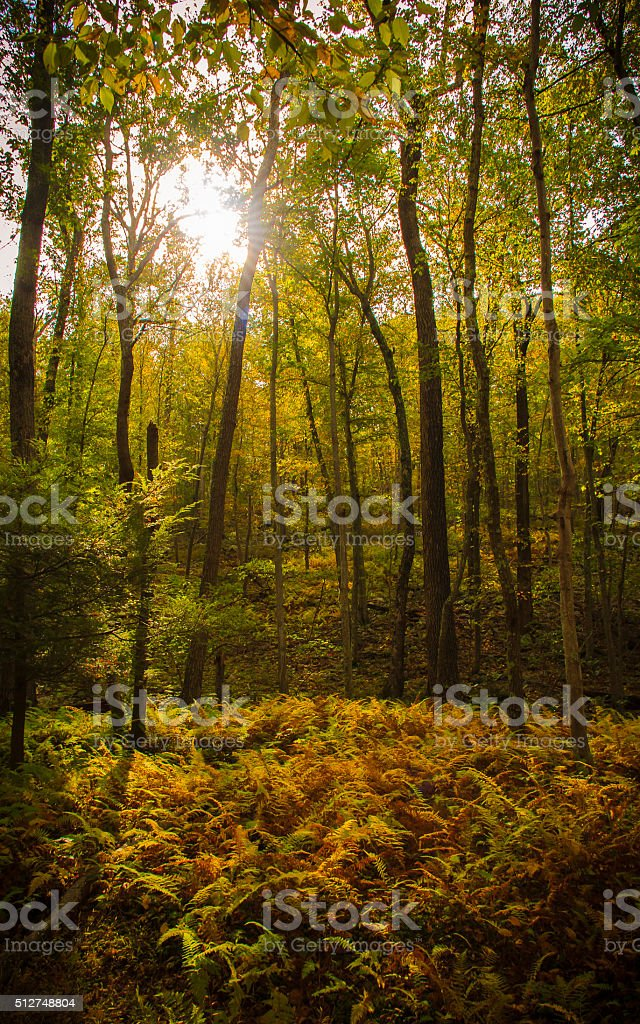 Sunlight through the forest stock photo