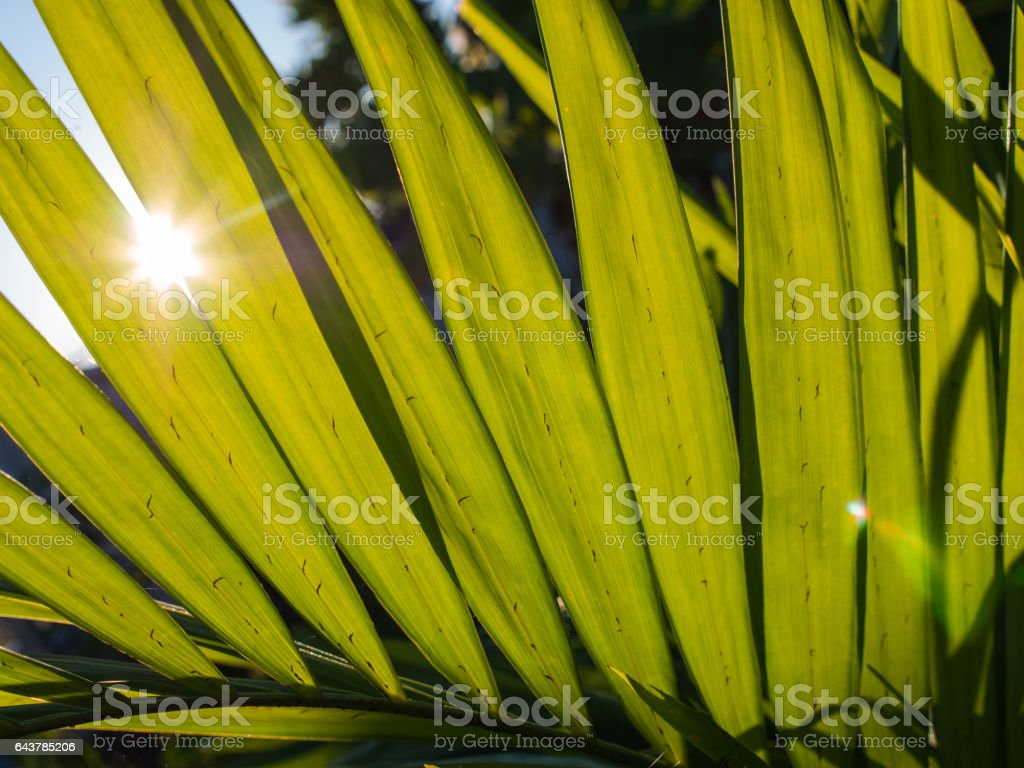 Sunlight Through The Leaf stock photo