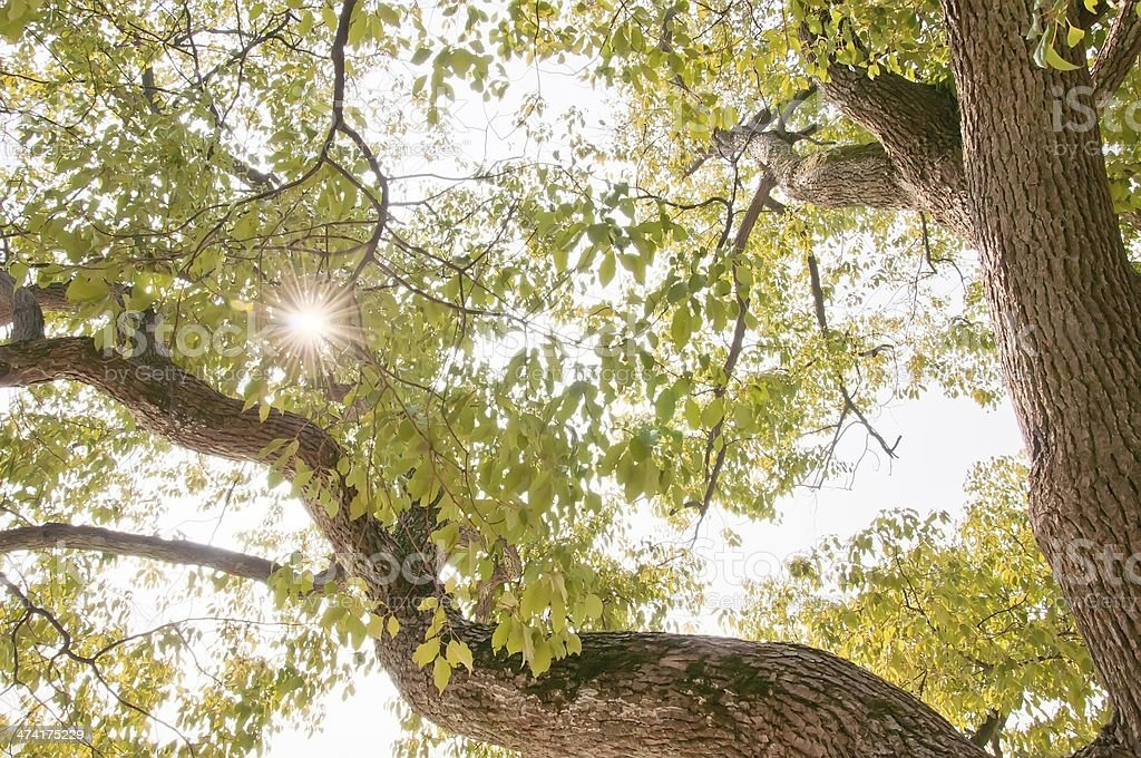 sunlight through the leaves stock photo