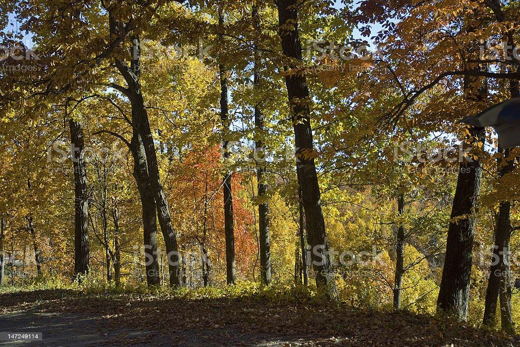Sunlight Through the Trees royalty-free stock photo