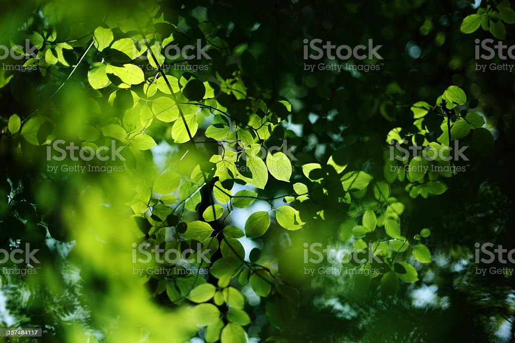 Sunlight Through The Treetops royalty-free stock photo