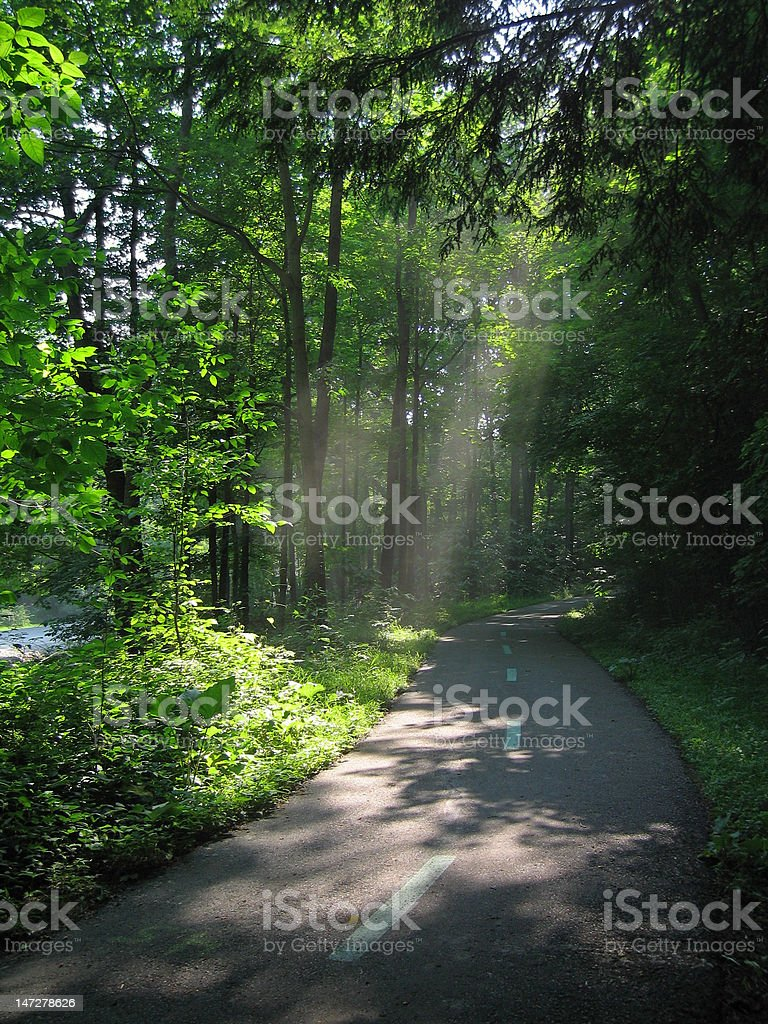 Sunlight through Trees stock photo