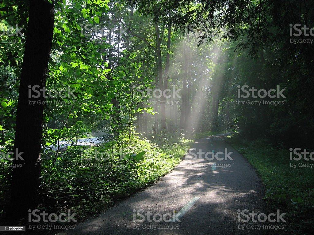Sunlight through Woods stock photo