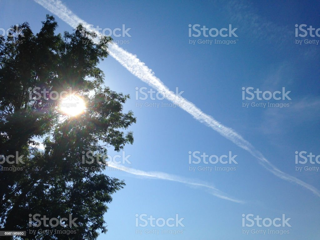 Sunlight Tree and Vapour Trails stock photo