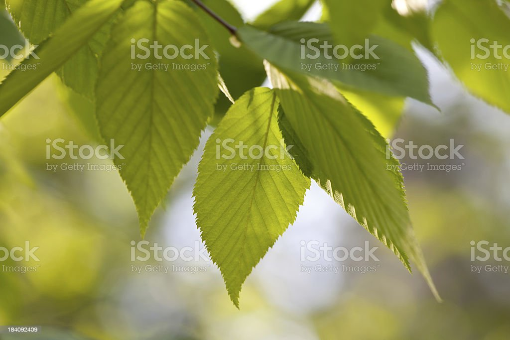 Sunlight warms leaves stock photo