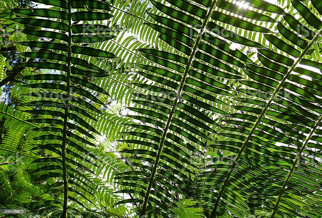 Sunlit fern green leaves and shadows in tropical forest. stock photo