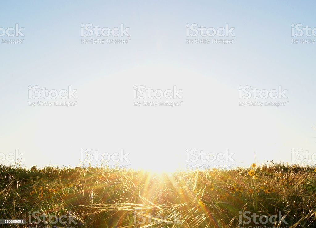 Sunlit Field royalty-free stock photo