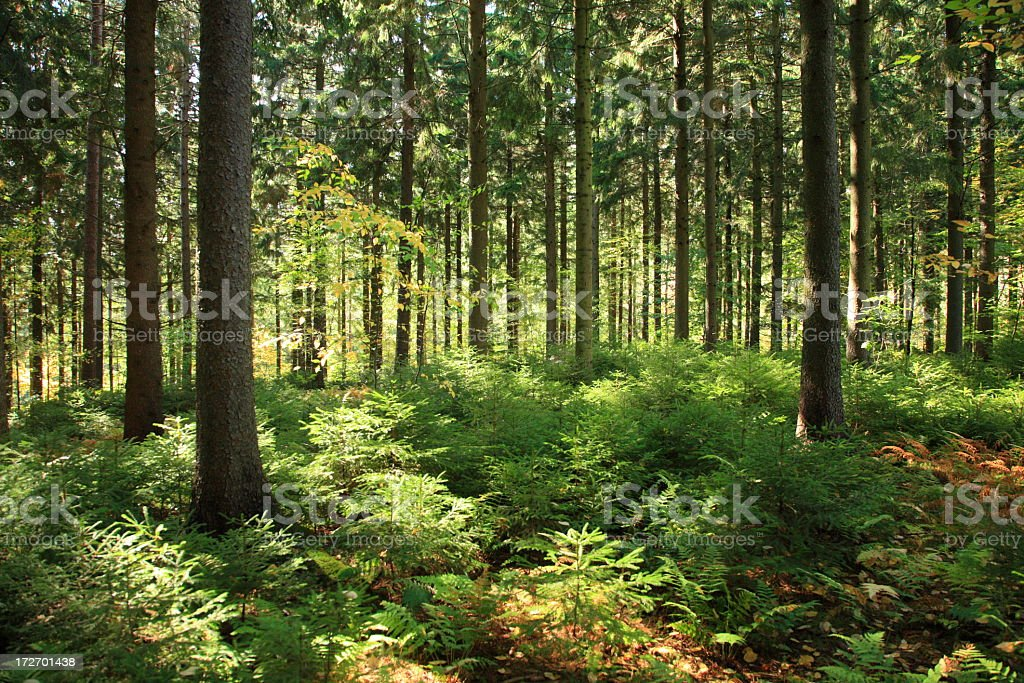 Sunlit Forest Interior stock photo