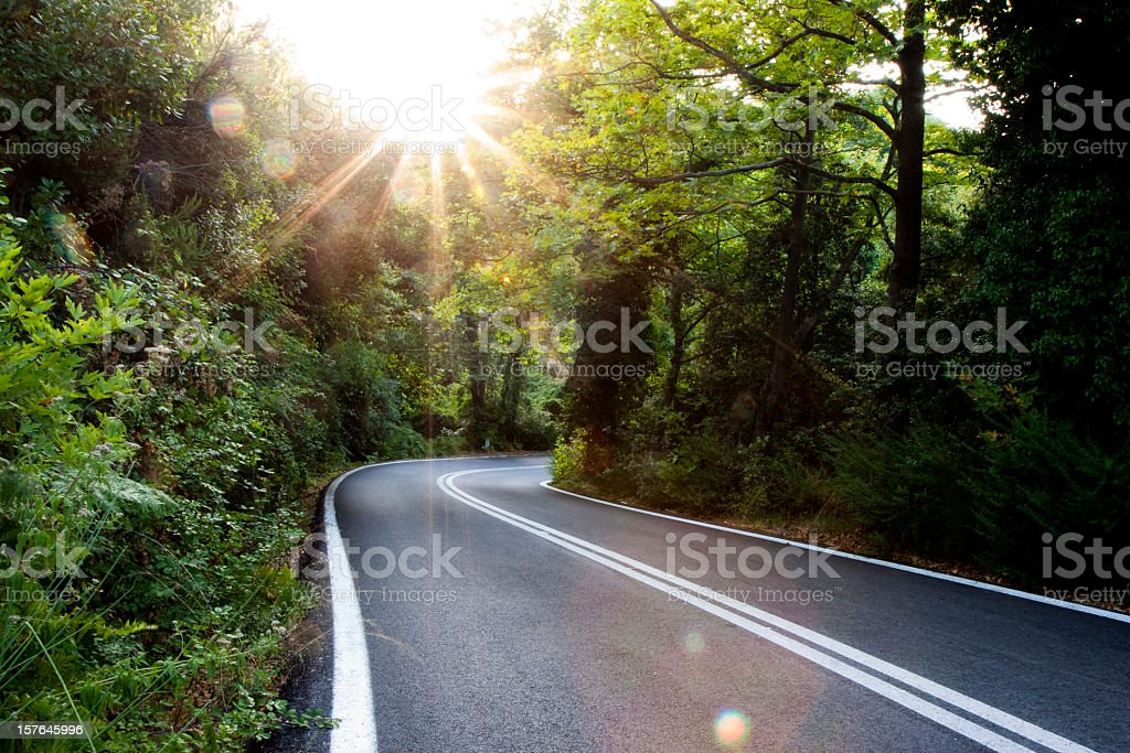 Sunlit Forest Road in Greece stock photo