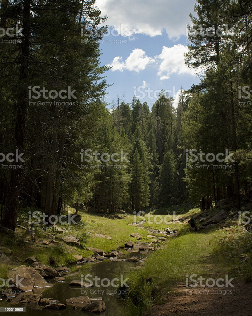 Sunlit Forest Stream stock photo