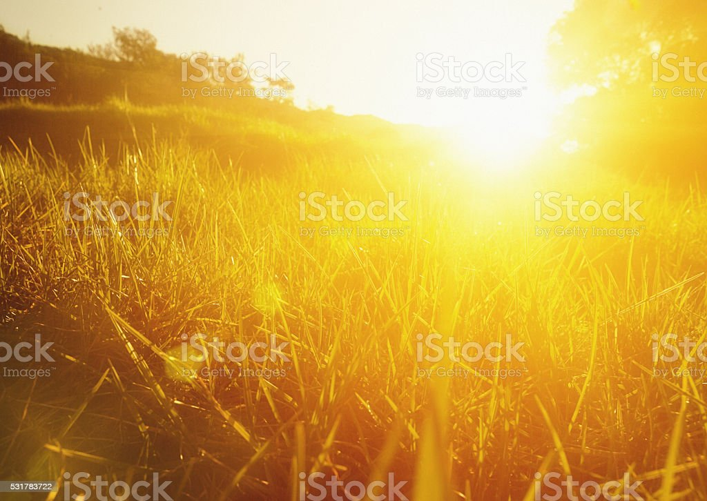 Sunlit grass meadow seen from ground level stock photo