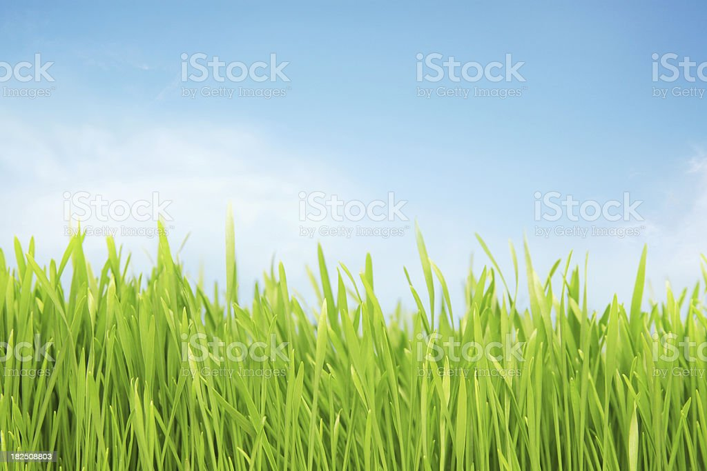 Sunlit grassy field royalty-free stock photo
