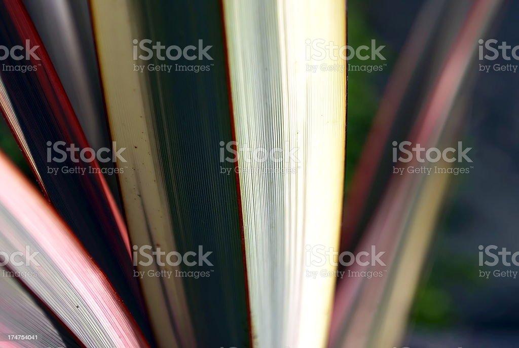 Sunlit Harakeke Leaves (NZ Flax) royalty-free stock photo