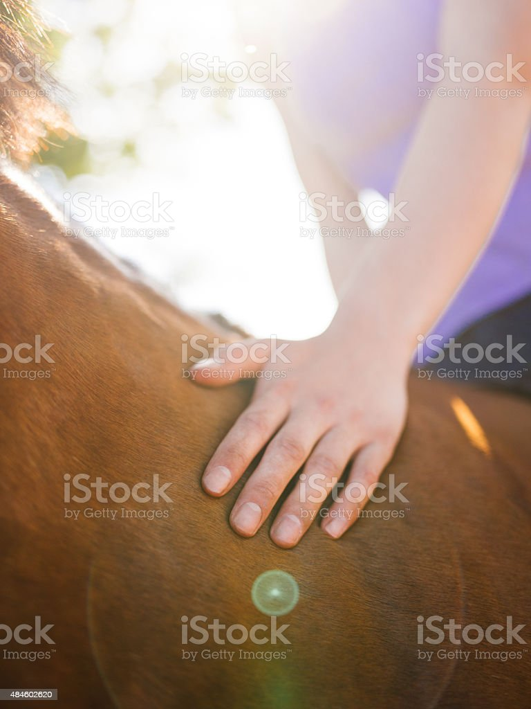 Sunlit image of a girl's hand caringly touching her horse stock photo