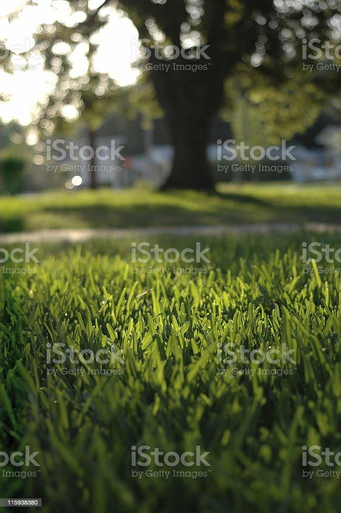 Sunlit lawn stock photo
