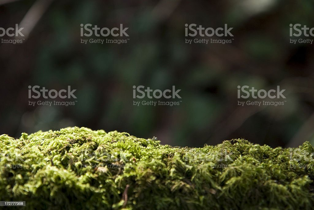 Sunlit moss on log, abstract background royalty-free stock photo