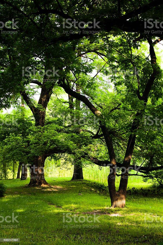 Sunlit Oak Forest Interior stock photo
