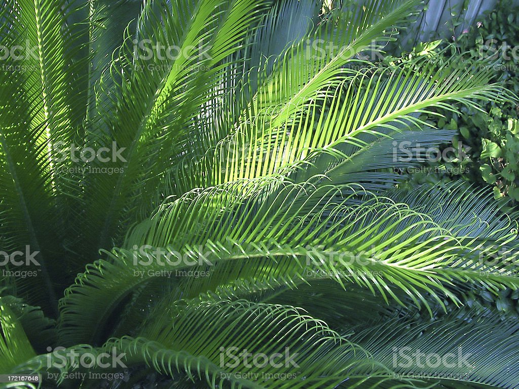 Sunlit Palm royalty-free stock photo
