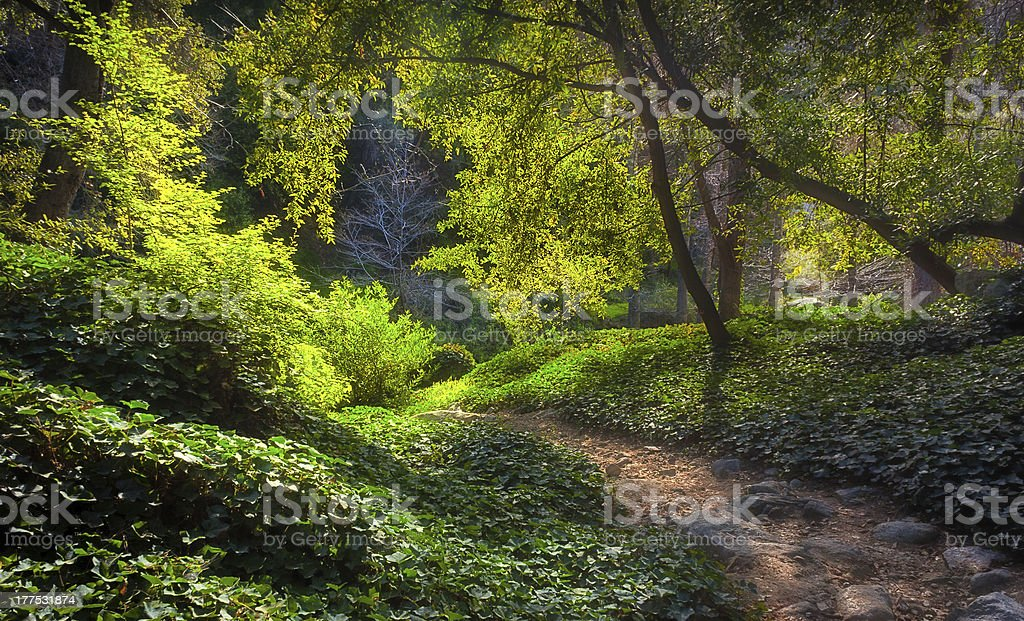 Sunlit Path at Chantry Flats in Early Morning stock photo