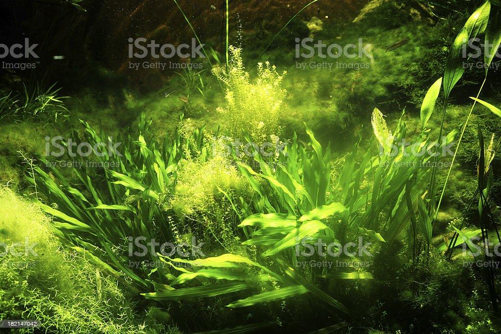 Sunlit Seabed stock photo