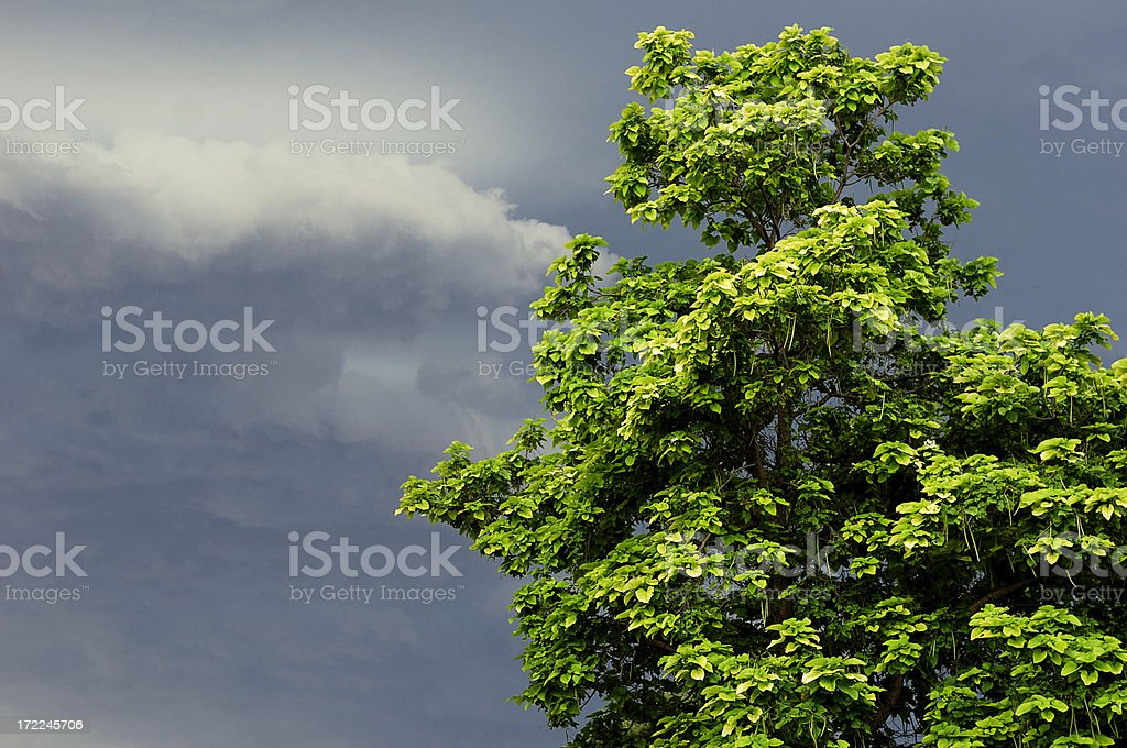 Sunlit tree against storm clouds royalty-free stock photo